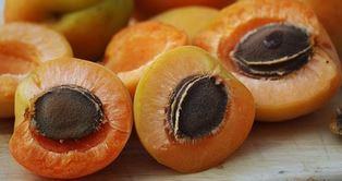 Aprikosenkerne